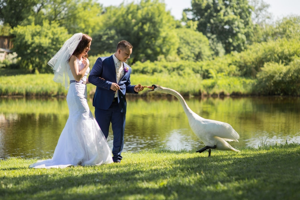 Live-stream-wedding-videographer